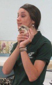 Eyes of the WIld-Hedgehog